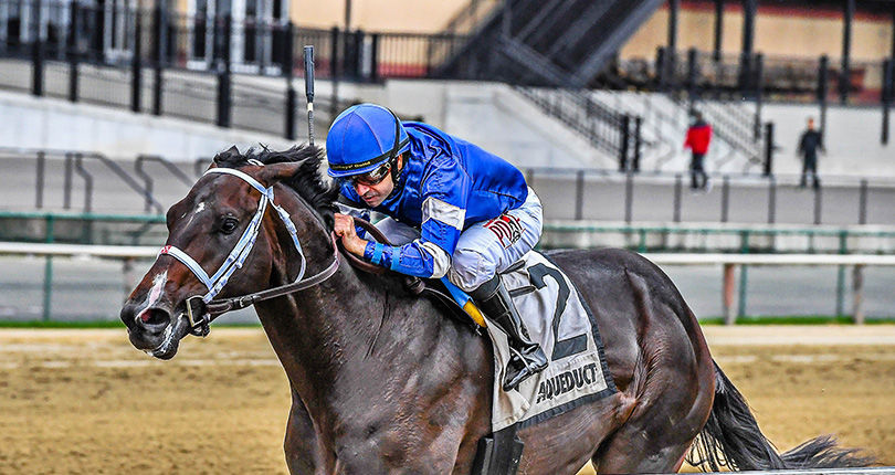 Nashua winner Avery Island returns to Big A for G3 Withers