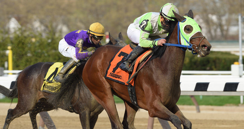 New York-breds set to sprint for stakes glory in Say Florida Sandy