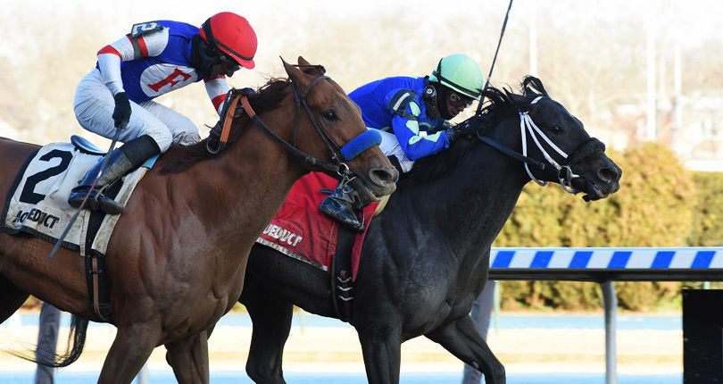 Honor Up wins third in a row with esteemable Haynesfield effort