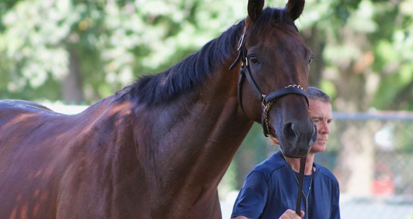 O'Brien's European contingent takes first spin around Belmont