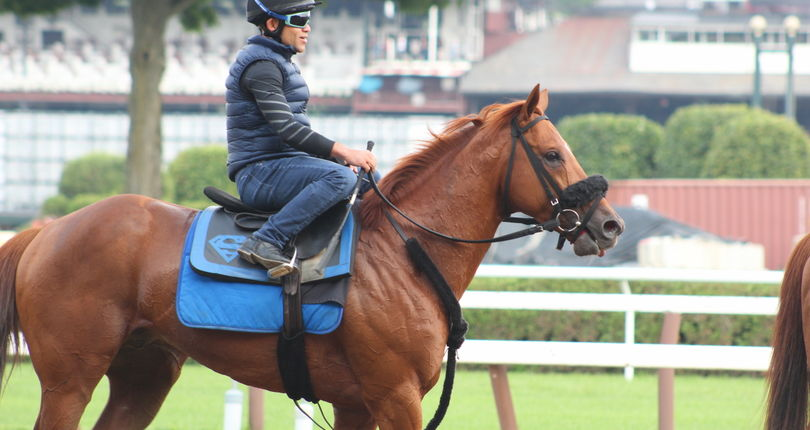G1 Whitney contender Mind Your Biscuits 'sitting on a big race'