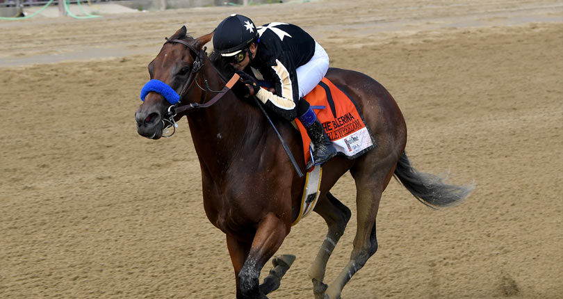 Marley's Freedom makes East Coast return in G3 Go For Wand