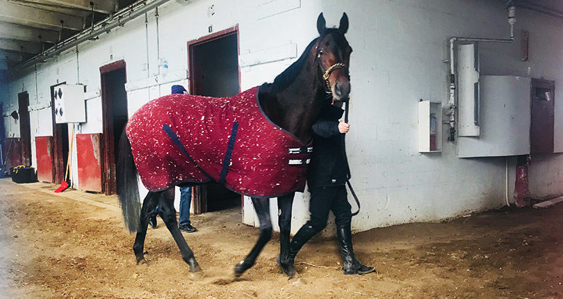 Mendelssohn stretches his legs at Aqueduct ahead of Saturday's Cigar Mile