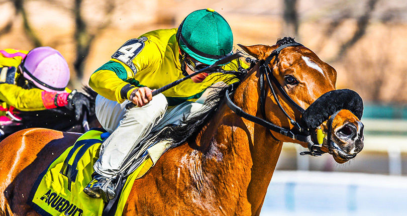 Dylan Davis ties NYRA record with six-win effort, including Gander (NYB) victory at the Big A