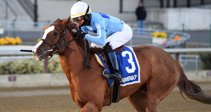 Sassy Agnes goes for fourth straight stakes win in Saturday's NYSS Fifth Avenue