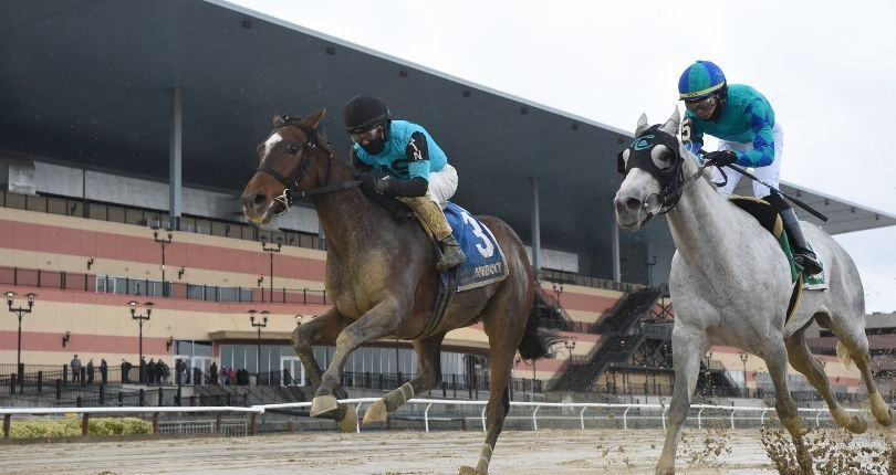Schwartz living his New York racing dream with Brooklyn Strong