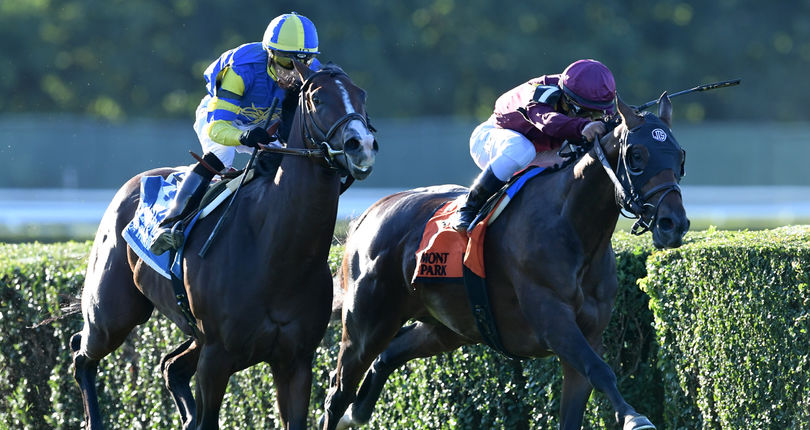 Saturday's Cross Country Pick 5 features graded stakes action from Belmont Park, Delaware Park