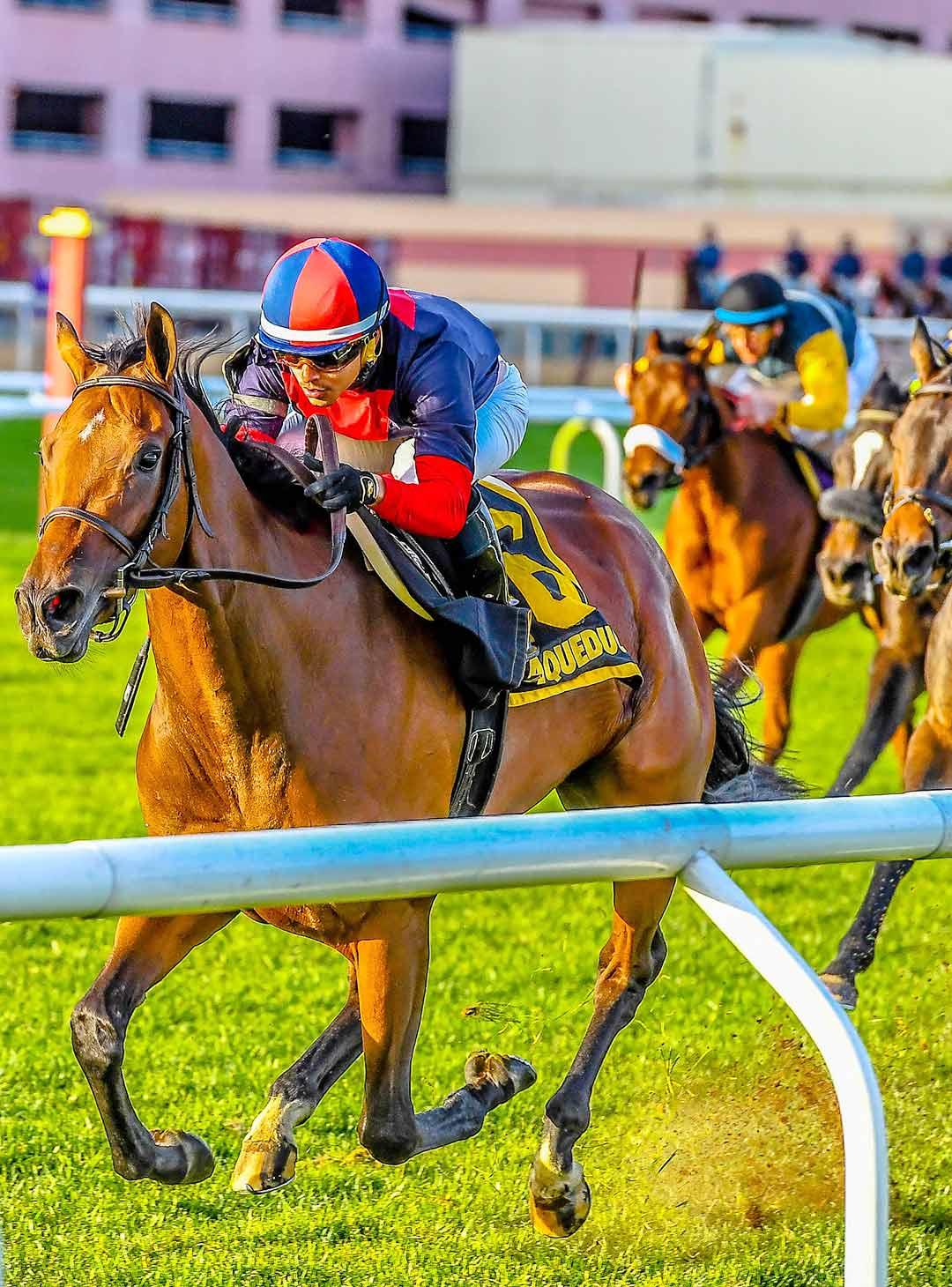 2018 03 30 nyra live racing falaconquin