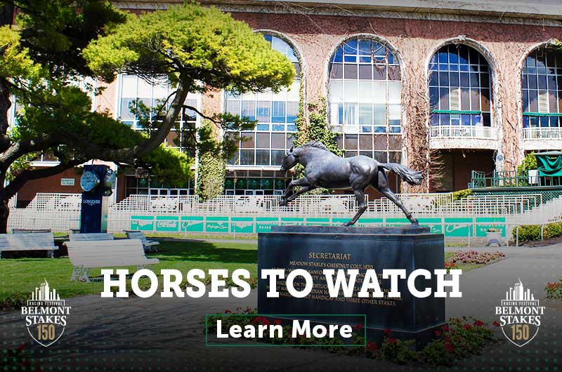 Horses to Watch